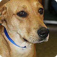 Adopt A Pet :: Sable - Wytheville, VA