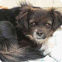 Adopt A Pet :: Bailey - Only $75 adoption! - Litchfield Park, AZ