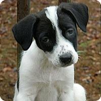 Adopt A Pet :: Jaquie Black - Staunton, VA