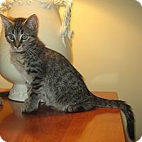Adopt A Pet :: ALFIE - 2014 - Hamilton, NJ