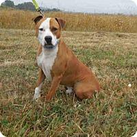 Adopt A Pet :: BUTCH - McKinleyville, CA