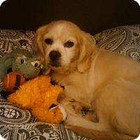 Adopt A Pet :: Starla - Alpharetta, GA