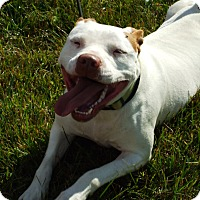 Adopt A Pet :: Dottie ( Courtesy Post ) - Upper Sandusky, OH
