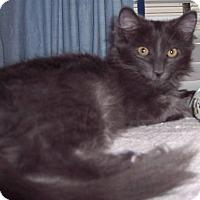 Adopt A Pet :: Melody - brewerton, NY