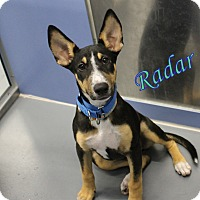 Adopt A Pet :: Radar - Winter Haven, FL