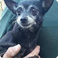 Adopt A Pet :: Kendall - Gainesville, FL