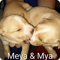 Adopt A Pet :: Meeya - Broken Arrow, OK