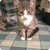 Adopt A Pet :: Dasher - Trevose, PA