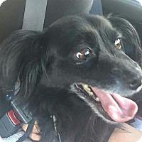 Adopt A Pet :: Oreo3 - Phoenix, AZ