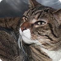 Adopt A Pet :: JENNY - Clayton, NJ