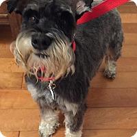 Adopt A Pet :: Drew - Redondo Beach, CA