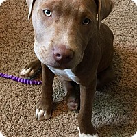 Adopt A Pet :: Hunny - Sacramento, CA