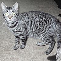 Adopt A Pet :: Sarah - Burgaw, NC