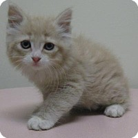 Adopt A Pet :: Almond - Gary, IN
