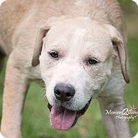 Adopt A Pet :: Sarah - Daleville, AL