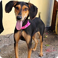 Adopt A Pet :: Cassie - from Costa Rica - Los Angeles, CA