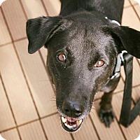 Adopt A Pet :: Cherish - Pitt Meadows, BC