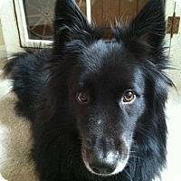 Adopt A Pet :: Jack - Friendswood, TX