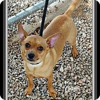 Adopt A Pet :: Gage - Tombstone, AZ