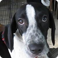 Adopt A Pet :: CeeCee~ Puppy! - St Petersburg, FL