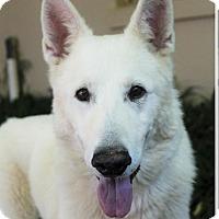 Adopt A Pet :: KIMBER - Red Bluff, CA