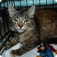 Adopt A Pet :: Chloe - Stafford, VA