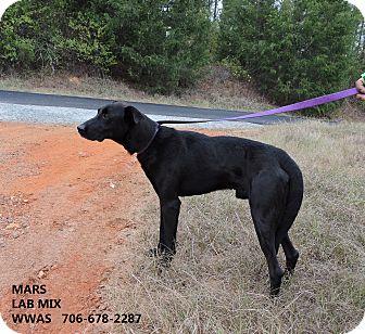 Labrador Retriever Mix Dog for adoption in Washington, Georgia - Mars