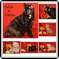 Adopt A Pet :: Sylvia & Kittens - Marietta, OH