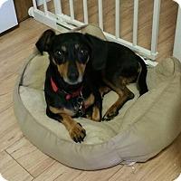 Adopt A Pet :: DAISY - Jackson, NJ