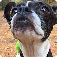 Adopt A Pet :: Mango - Courtland, AL