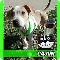 Adopt A Pet :: Cajun-adoption pending! - Des Moines, IA