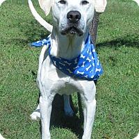 Adopt A Pet :: Kingsley - Menomonie, WI