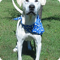 Labrador Retriever Mix Dog for adoption in Menomonie, Wisconsin - Kingsley
