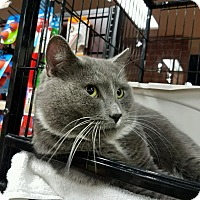 Adopt A Pet :: Derek - Reston, VA