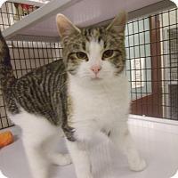 Adopt A Pet :: Hazel - Muscatine, IA