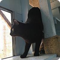 Adopt A Pet :: Batman - Savannah, GA
