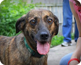 Mountain Cur Mix Dog for adoption in Albert Lea, Minnesota - Cee Cee