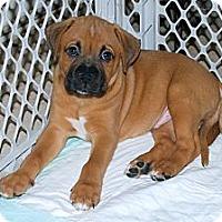 Adopt A Pet :: Tyson - Minneola, FL