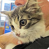 Adopt A Pet :: Desiree - Riverhead, NY