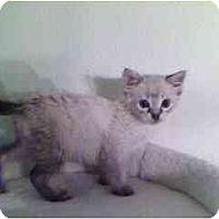 Adopt A Pet :: Marley - Davis, CA
