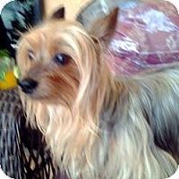 Adopt A Pet :: Wii Z - North Port, FL