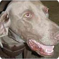 Adopt A Pet :: Rio - Eustis, FL