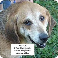 Adopt A Pet :: I.D. # 721-08 - RESCUED! - Zanesville, OH