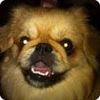 Adopt A Pet :: Crosby - Chantilly, VA