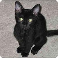 Adopt A Pet :: Pip & Squeak - Irvine, CA