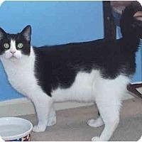 Adopt A Pet :: Burger - Colmar, PA