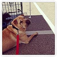 Adopt A Pet :: Rosie in WA - Mira Loma, CA