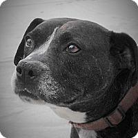 Adopt A Pet :: Coco (JR) - Santa Ana, CA
