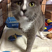 Adopt A Pet :: Tripp - Byron Center, MI