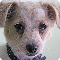 Adopt A Pet :: Ladybug - Yuba City, CA